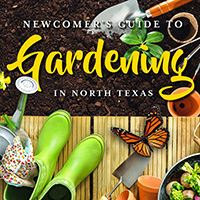Newcomers Guide to Gardening