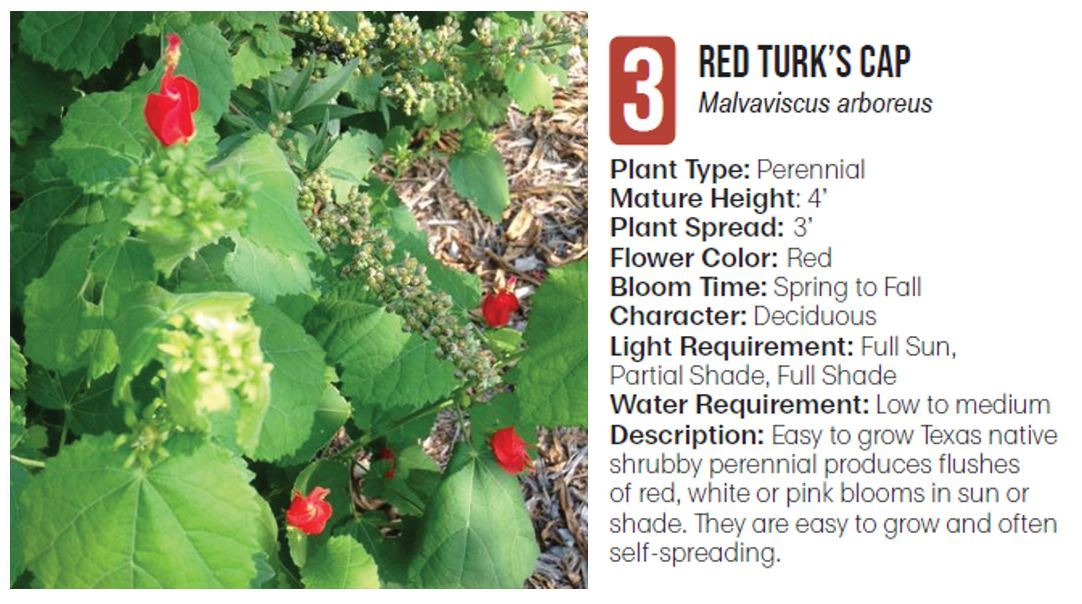3 red turks cap