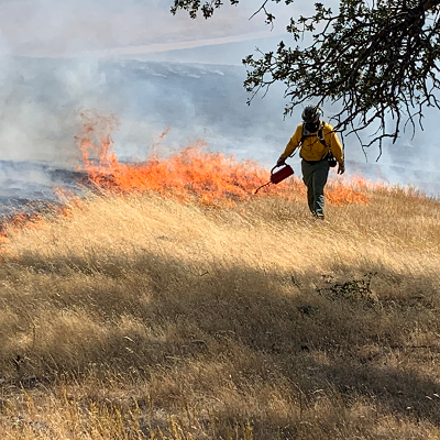 Large field of dry grass with row of fire in the distance and firefighter in front.